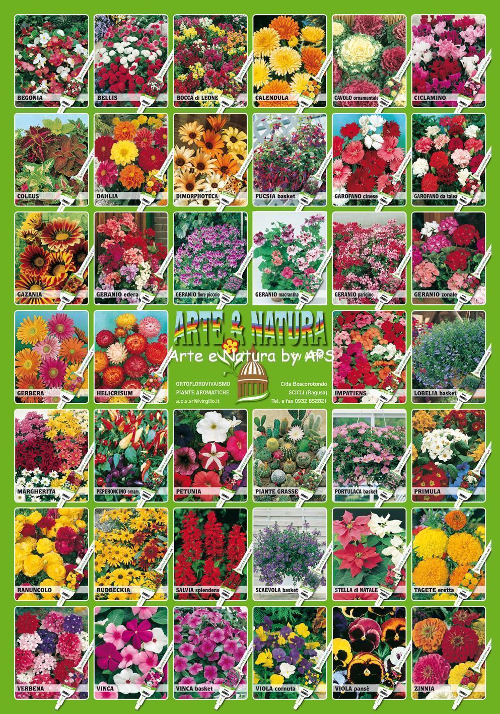 Piante floricole