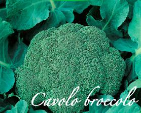 cavolo broccolo piante orticole aps vivai