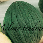 melone tendral