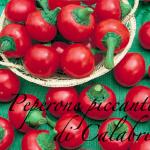 peperone piccante di calabria.png