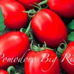 pomodoro Big Rio.png