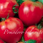 pomodoro belmonte.png