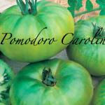 pomodoro carolina.png