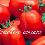 pomodoro cencara.png