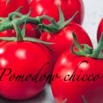 pomodoro chicco