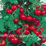 pomodoro ciliegino nano.png