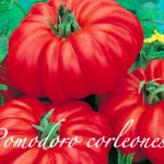 pomodoro corleonese.png