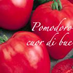 pomodoro cuor di bue.png