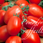 pomodoro raffaello.png
