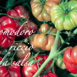 pomodoro riccio da salsa.png