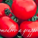pomodoro a grappolo