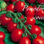 pomodoro scocca.png