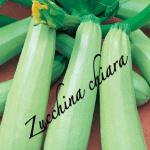 zucchina chiara