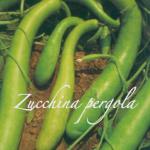 zucchina pergola